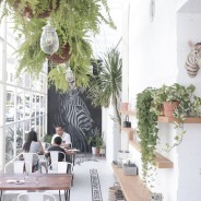 [台中咖啡店]Zebra Apartment Cafe 斑馬公寓咖啡~元氣週邊好店推薦